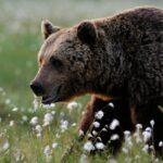 История, как медведь человека спас от смерти