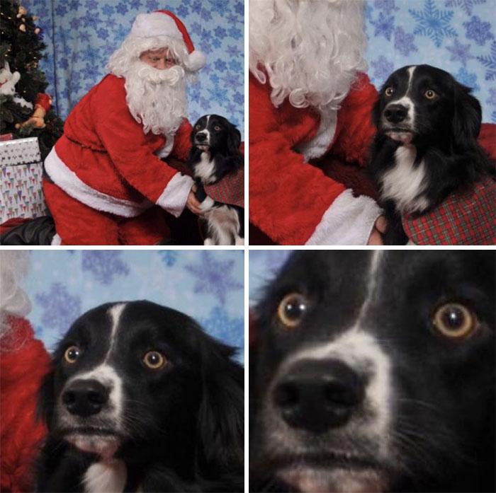 Собаки 11