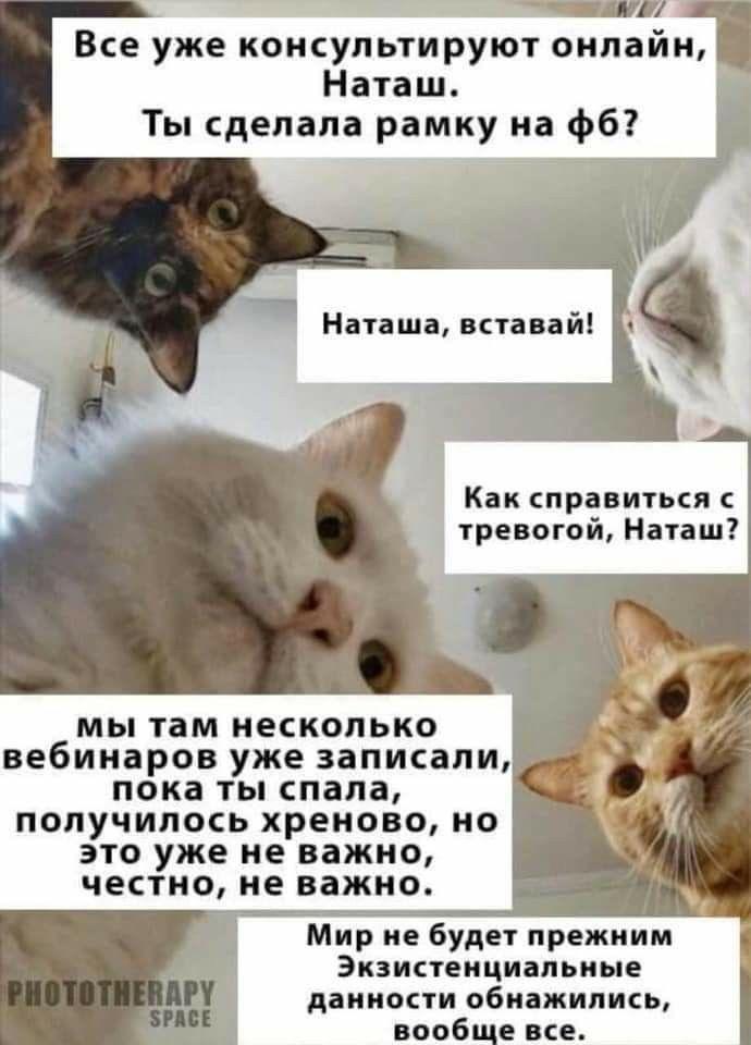 Мемы про котов и Наташу в хронологическом порядке