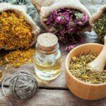 Фитотерапия. Как правильно лечиться растениями и травами