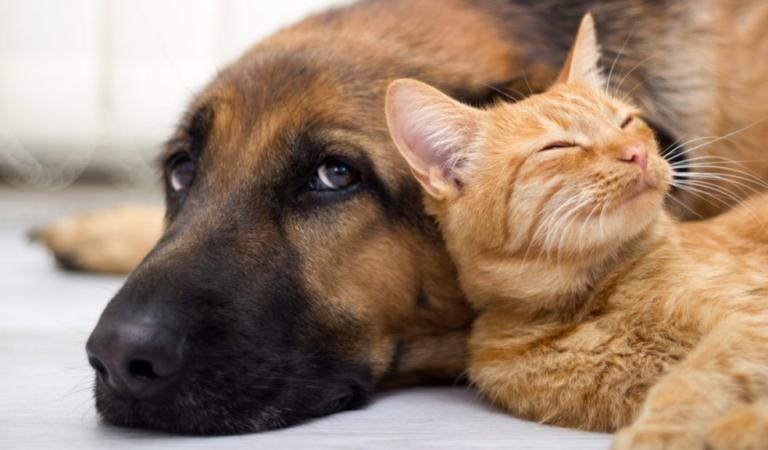 Великобритания признает животных разумными существами