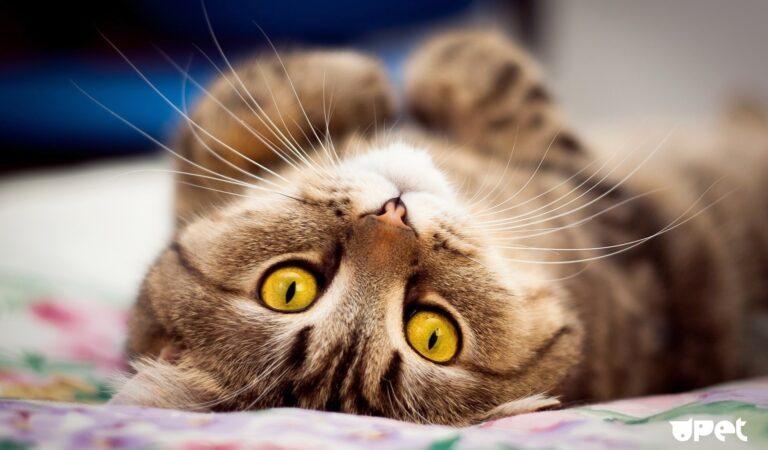 Милые коты и котики — подборка фото